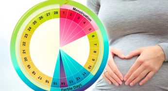 FSH and AMH - Determining Ovarian Reserve - Reproductive Wellness
